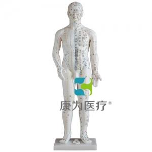 """""""康为医疗""""人体针灸模型60CM"""