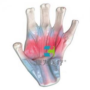 """""""万博手机手机登录app医疗""""手骨间肌模型"""