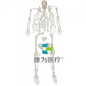 """""""万博手机手机登录app医疗""""人体全身散骨模型"""
