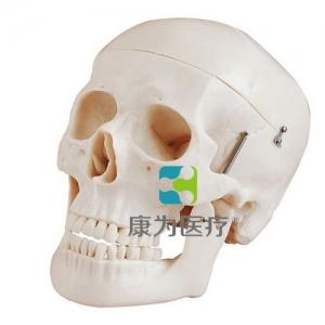 """""""康为医疗""""自然大头颅骨模型"""