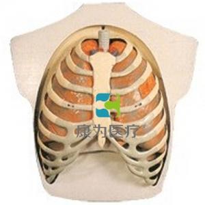 """""""万博手机手机登录app医疗""""呼吸系统模型"""