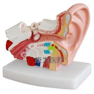 """""""万博手机手机登录app医疗""""桌上型耳解剖模型"""