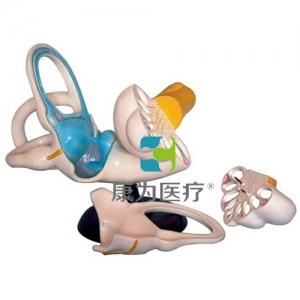 """""""万博手机手机登录app医疗""""内耳解剖放大"""
