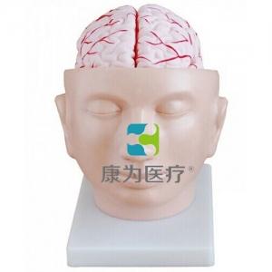 """""""万博手机手机登录app医疗""""头部附脑动脉模型"""