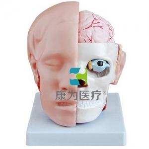 """""""万博手机手机登录app医疗""""头解剖附脑动脉模型"""