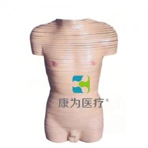 """""""万博手机手机登录app医疗""""男性躯干横断断层解剖模型"""