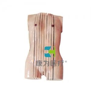 """""""万博手机手机登录app医疗""""女性人体躯干矢状断层解剖模型"""