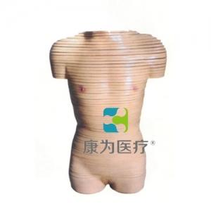 """""""万博手机手机登录app医疗""""女性躯干横断断层解剖模型"""