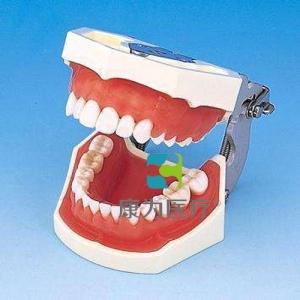 """""""万博手机手机登录app医疗""""标准牙颌模型"""