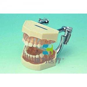 """""""万博手机手机登录app医疗""""可拆乳牙颌模型"""