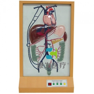 """""""万博手机手机登录app医疗""""门静脉侧支循环电动模型"""