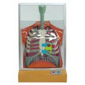 """""""万博手机手机登录app医疗""""人体呼吸运动电动模型"""