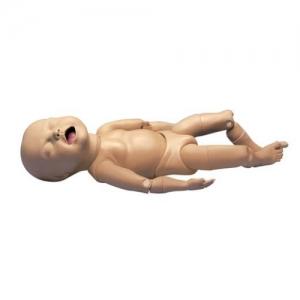 德国3B Scientific®关节活动的胎儿