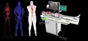 全身人体动静脉血管模型,动静脉血管及骨骼模拟系统