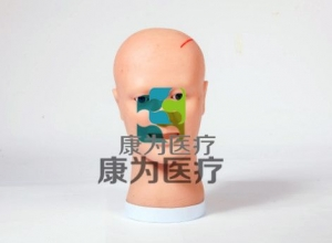 脑室引流护理模型, 脑室引流术后护理操作模型,侧脑室穿刺引流术仿真训练模型。
