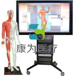 蒙医多媒体人体针灸穴位26寸42寸交互数字平台(蒙古族医术)