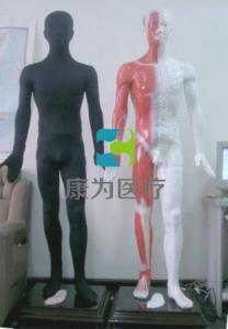 蒙医光电感应多媒体按摩点穴电子人体模型(蒙古族医术)