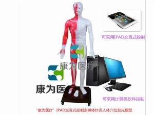 光电感应键控人体针灸穴位发光模型(标准款)