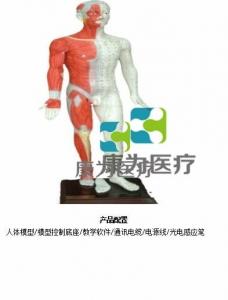 蒙医键控多媒体按摩点穴电子人体模型(中文版本,粤语版本,英语版本,蒙古语版本)