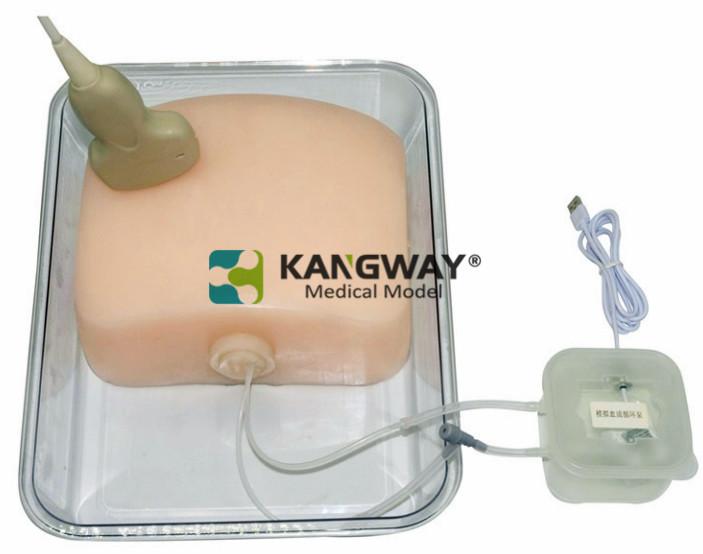 超声引导下产科脐带血穿刺训练模块